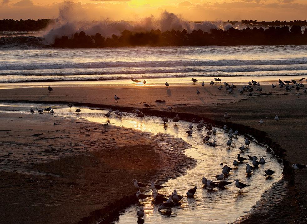 浜辺の集い